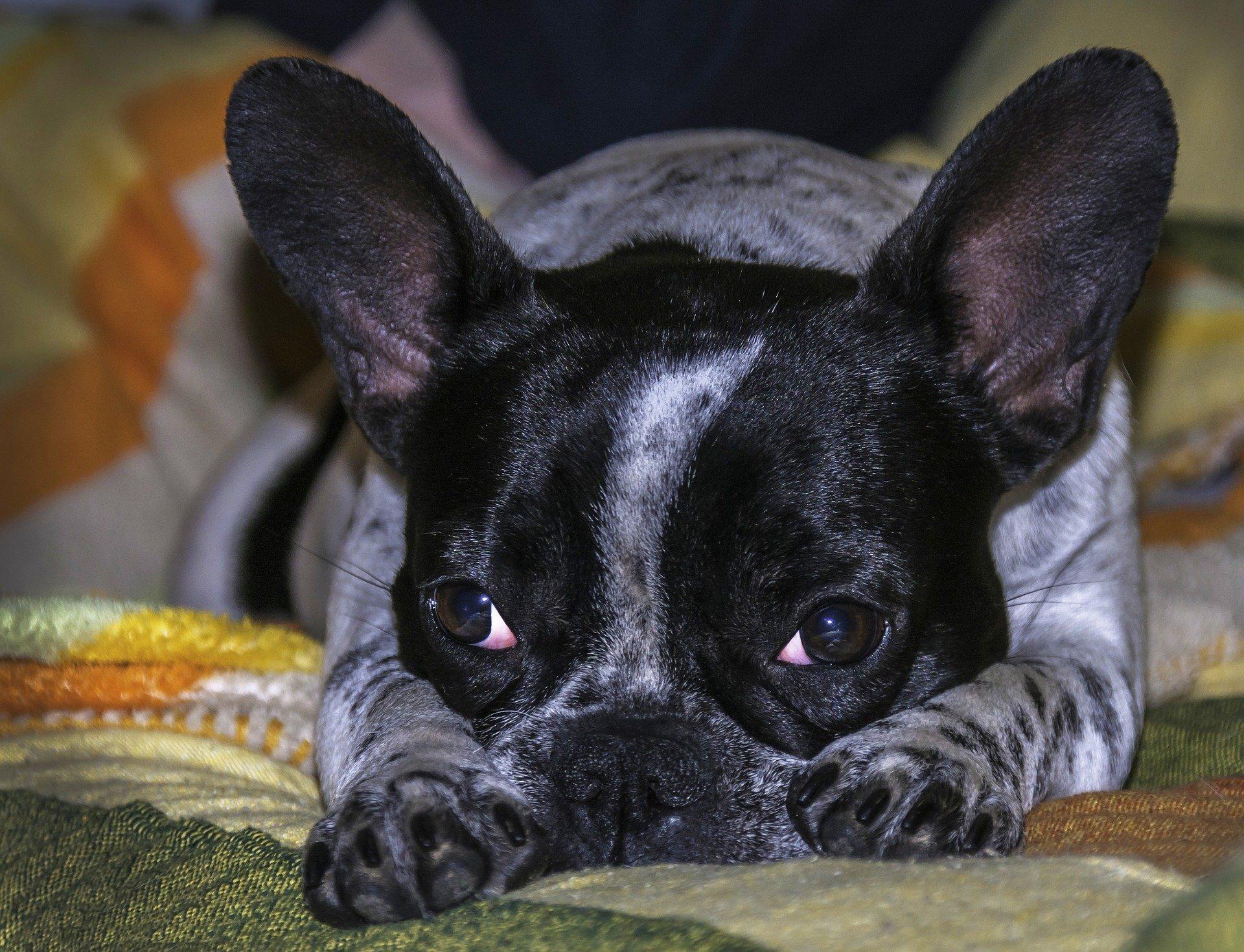 Cuccia per cane: caratteristiche per un acquisto sicuro