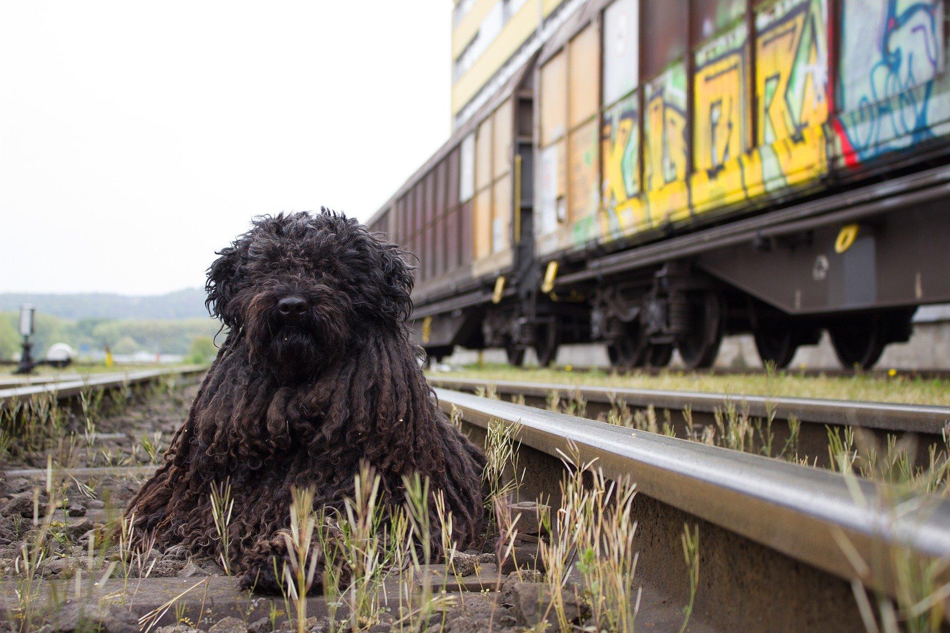 Viaggio in treno con il cane: alcuni consigli utili