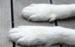 Zampe del cane: le tipologie e le caratteristiche