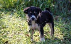 Singhiozzo nel cane: le cause e i rimedi