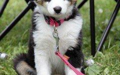 Articoli per cani: indispensabili per la sua vita
