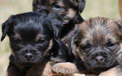 Allattamento dei cuccioli di cane: come farlo artificialmente