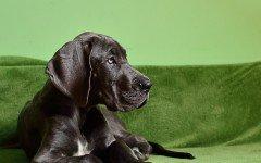 Come prendersi cura del cane a pelo corto: la toelettatura