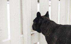 Cancelletti per cani: la soluzione per una serena convivenza
