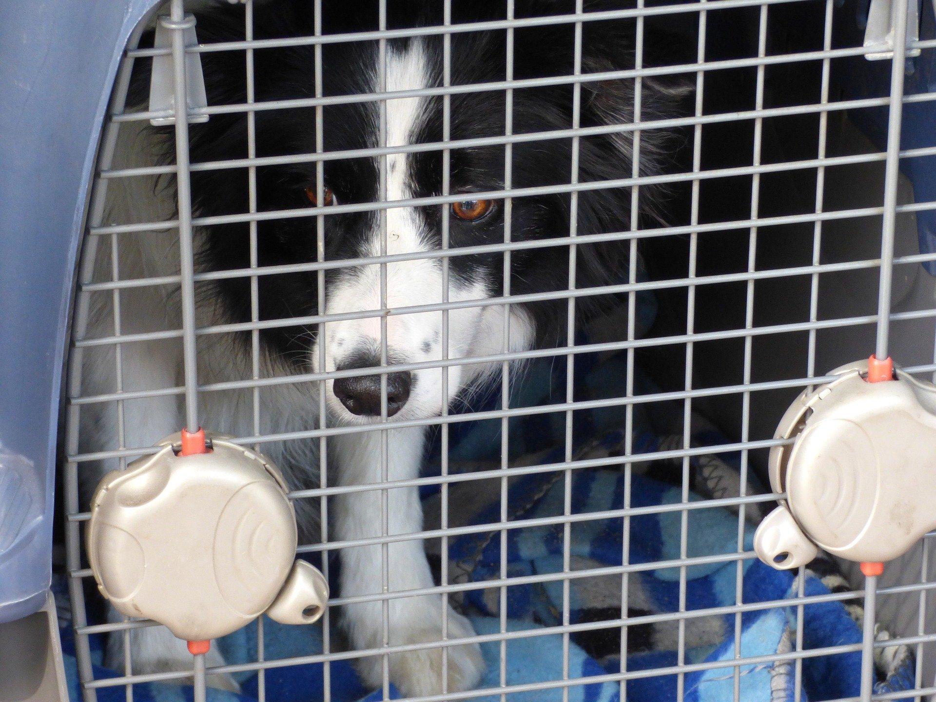 Trasporto cani in auto ecco cosa dice la legge