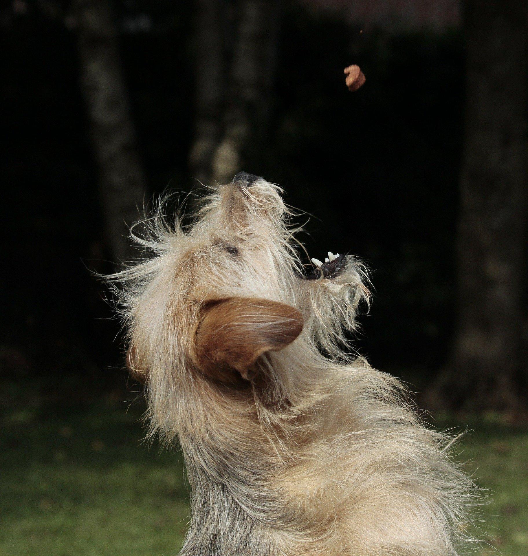 Come addestrare un cane a non mangiare da estranei