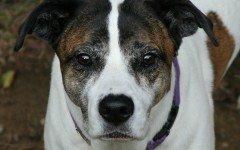 Deltacortene cane: il medicinale e gli effetti collaterali