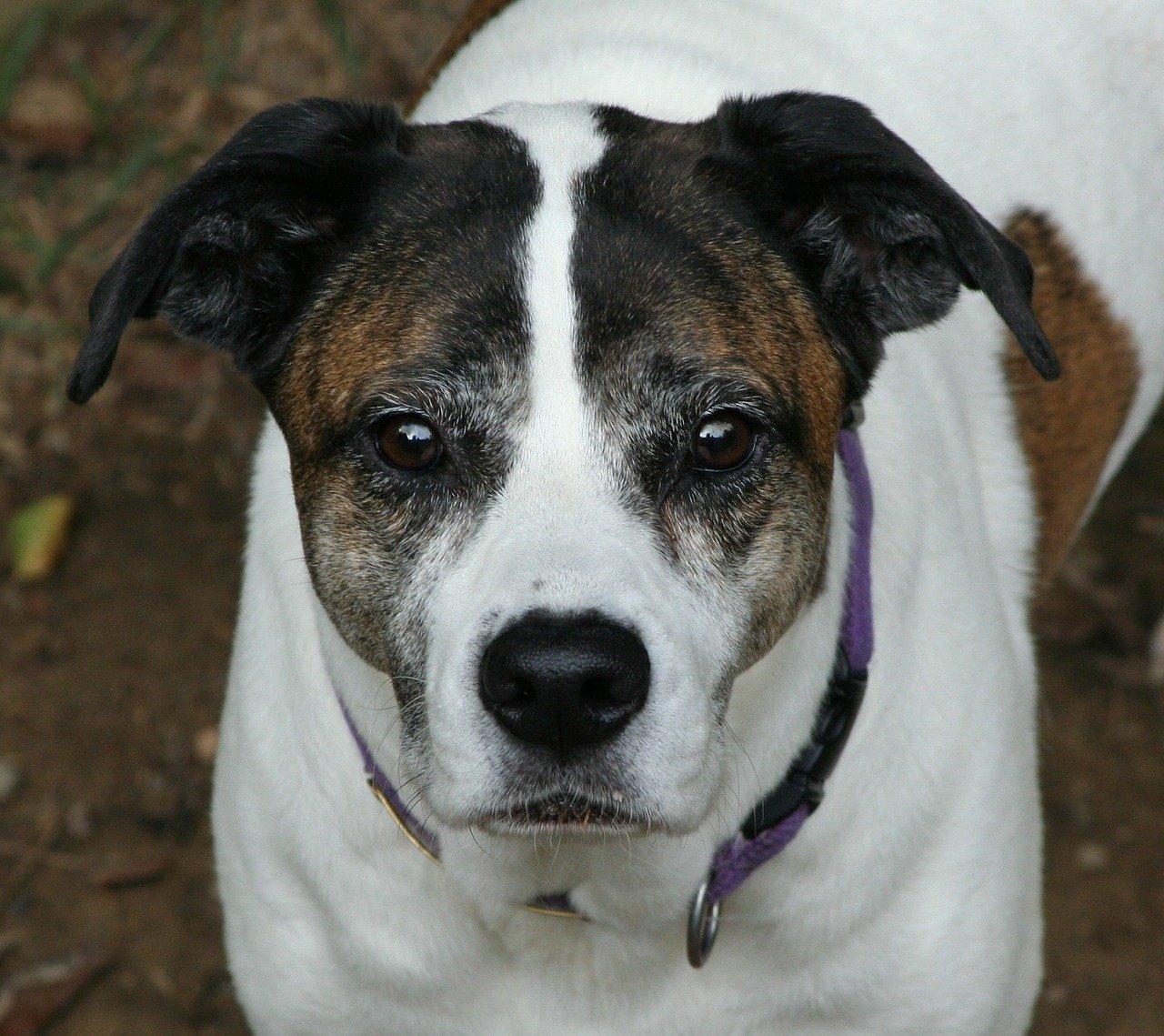 Deltacortene cane il medicinale e gli effetti collaterali for Antinfiammatorio cane