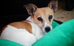 Cuscini per cani, un giaciglio accogliente per Fido