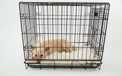 Gabbie per cani: come funzionano e le tipologie