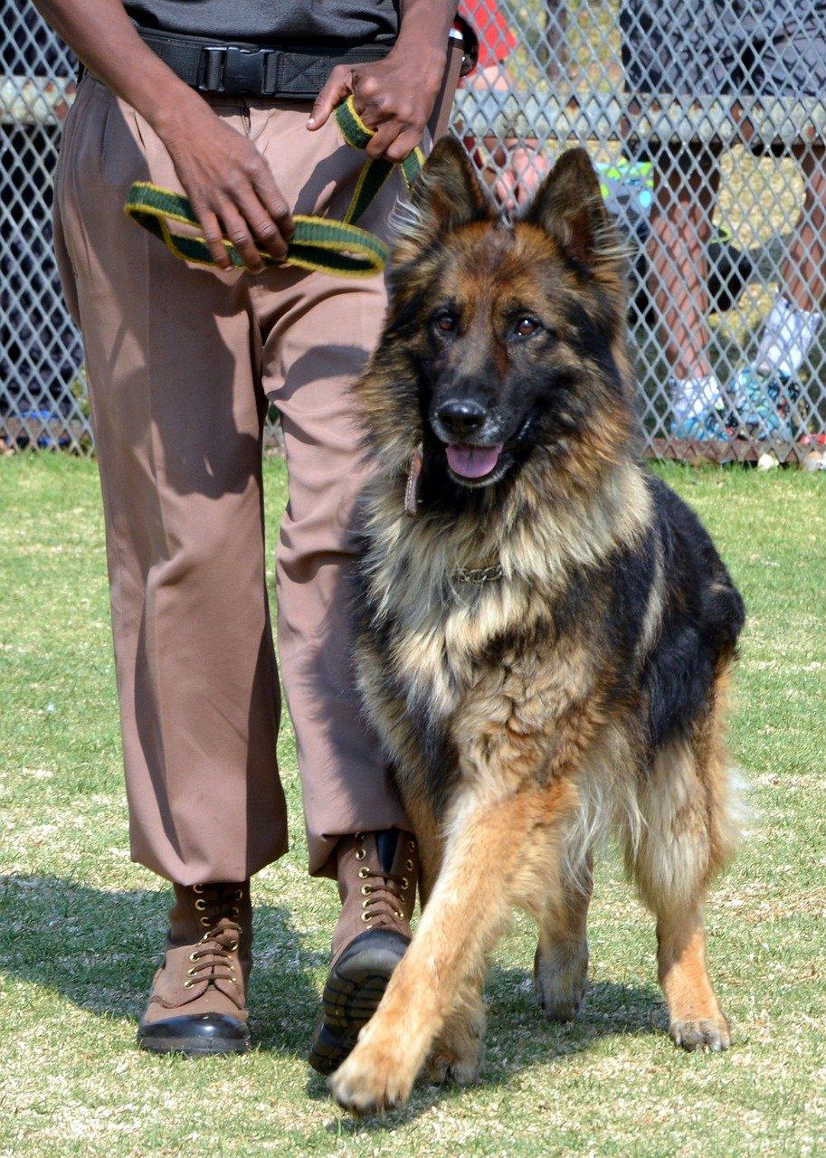 Come addestrare un cane con il fischietto il metodo giusto