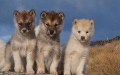 Cura dei cuccioli di cane: l' alimentazione