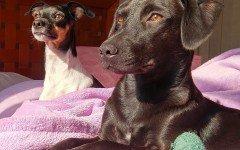 Agevolazioni fiscali per animali: sconti e detrazioni