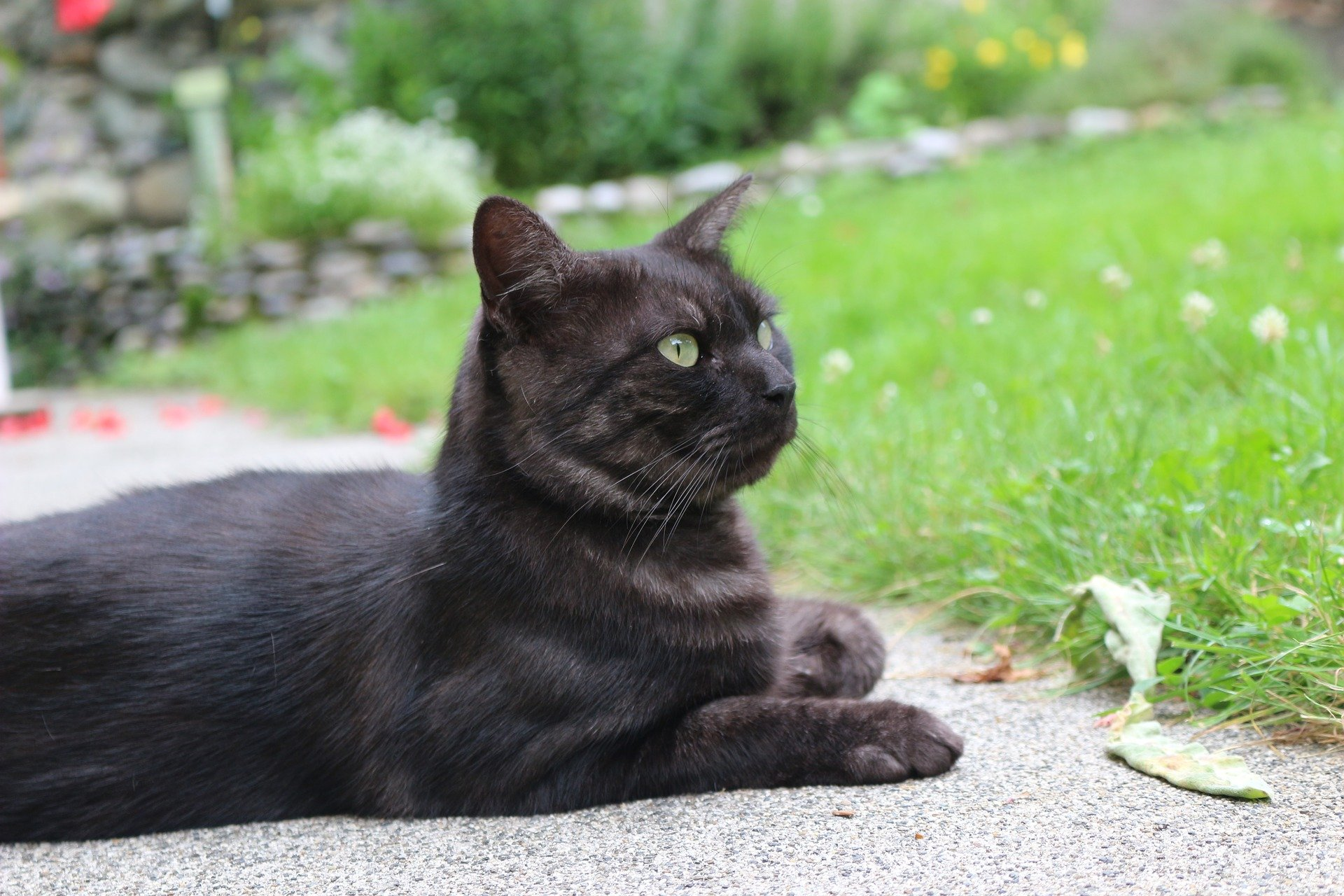 Baytril per gatto: quando usarlo e gli effetti collaterali