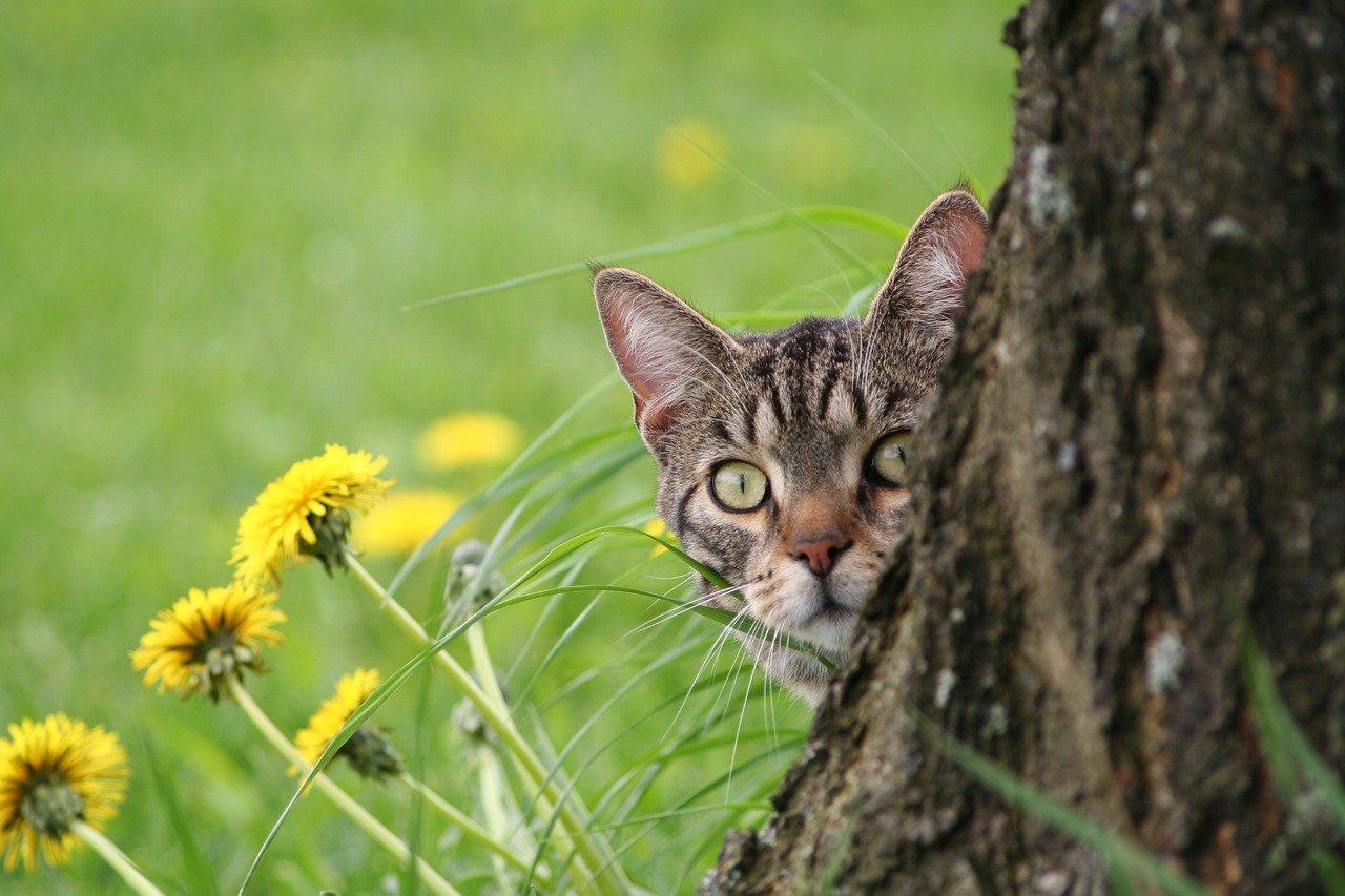 Microchip nel gatto: perché è così importante
