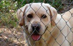 Come educare un cane del canile e farlo abituare in casa