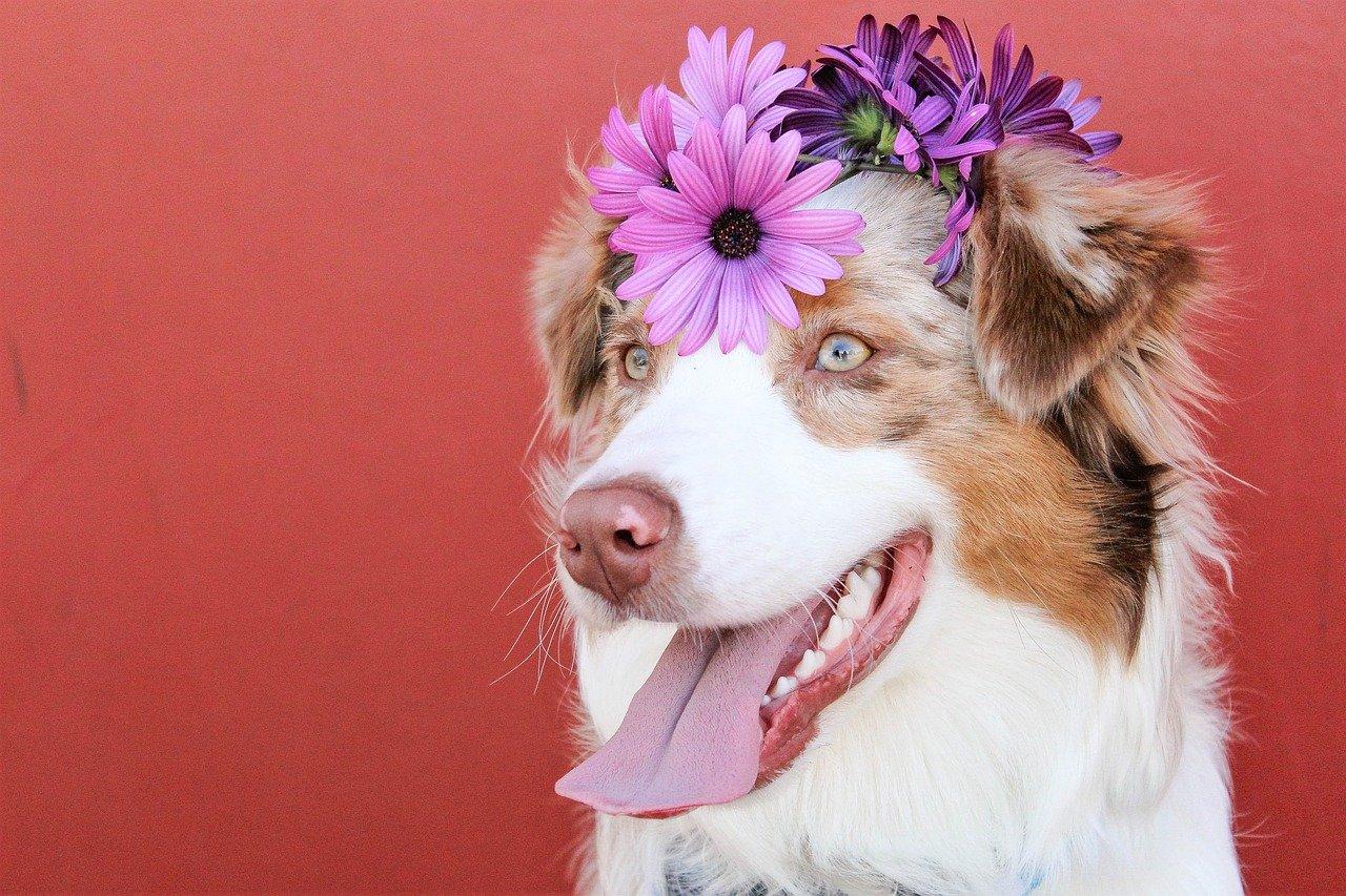 6 Consejos para Tener un Perro Feliz