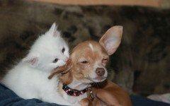 Sideremia alta nel gatto e nel cane: cause e rimedi
