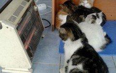 Negoziante ospita i gatti randagi per proteggerli dal freddo