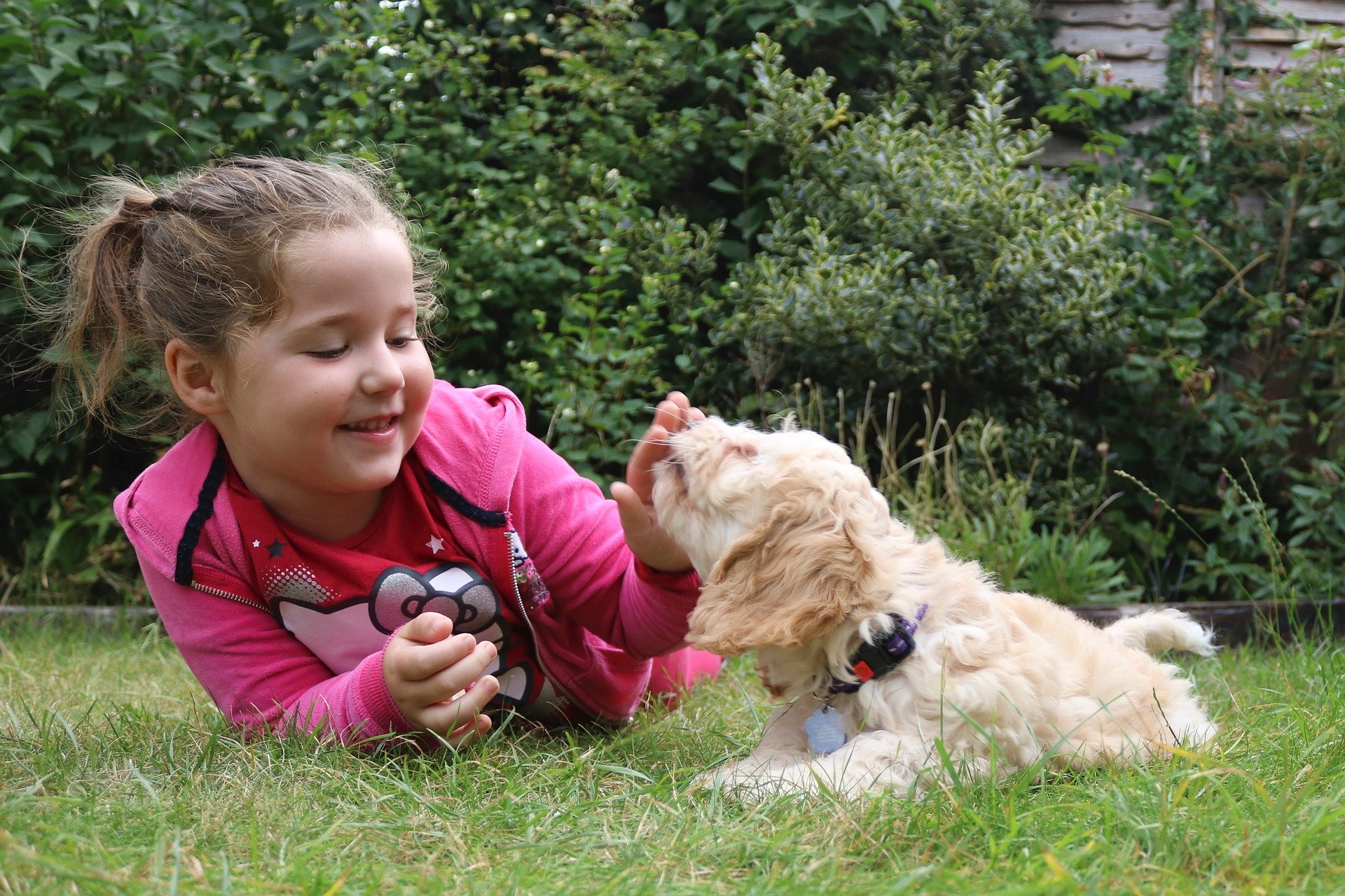 Cani per bambini: quali sono le razze più adatte?