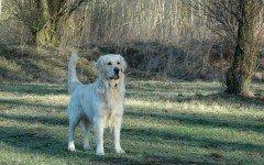 La displasia del cane: le cause e i problemi di questa malattia