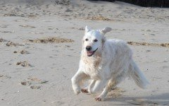 Cani in spiaggia: quali sono le regole da osservare?