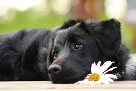sognare cani sognare un cane