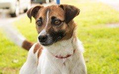 Addestrare un cane con il guinzaglio e senza