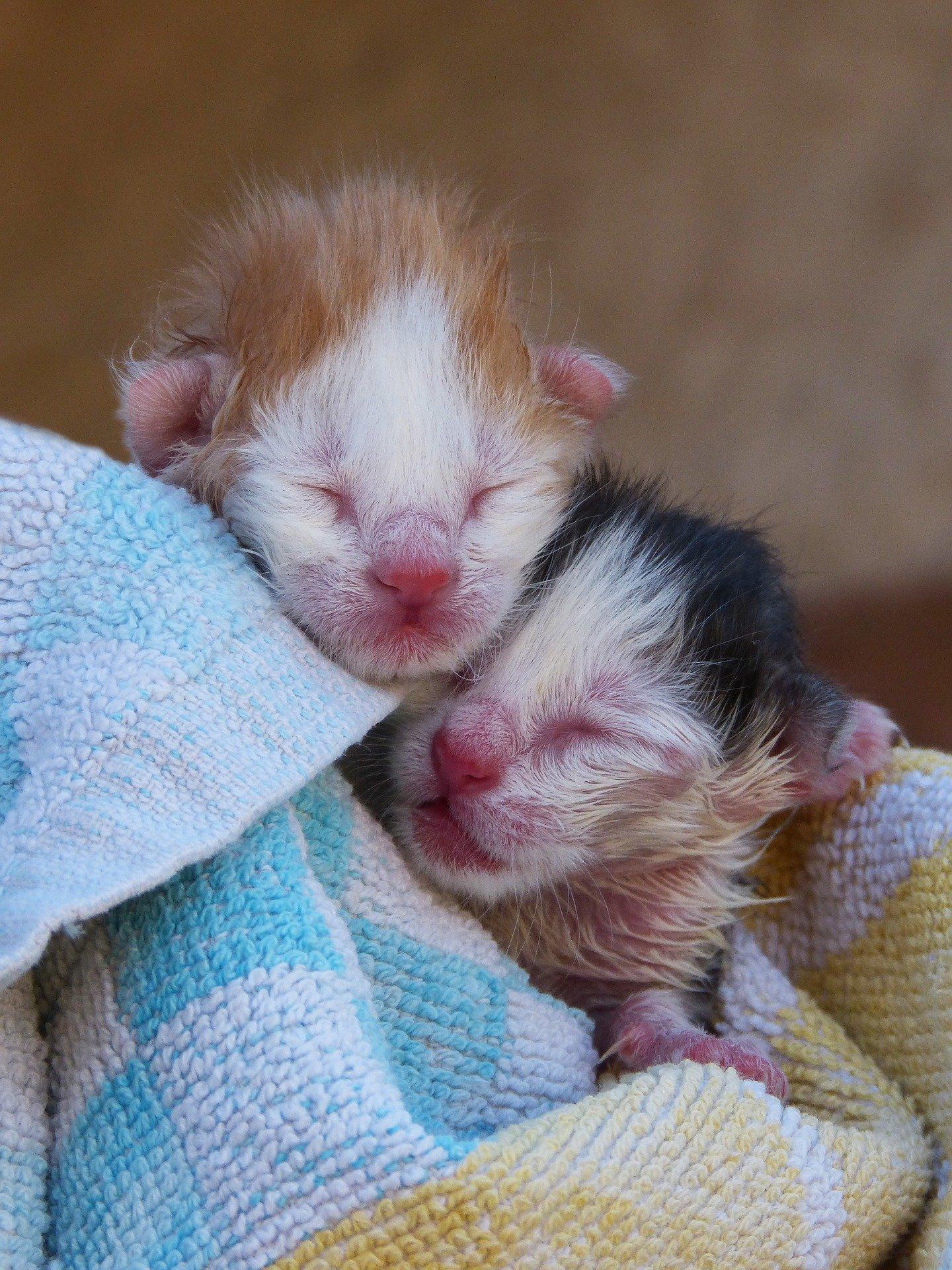 Gatti appena nati: come prendersi cura delle loro esigenze