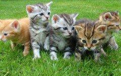 Svezzamento gattini, le regole fondamentali da seguire