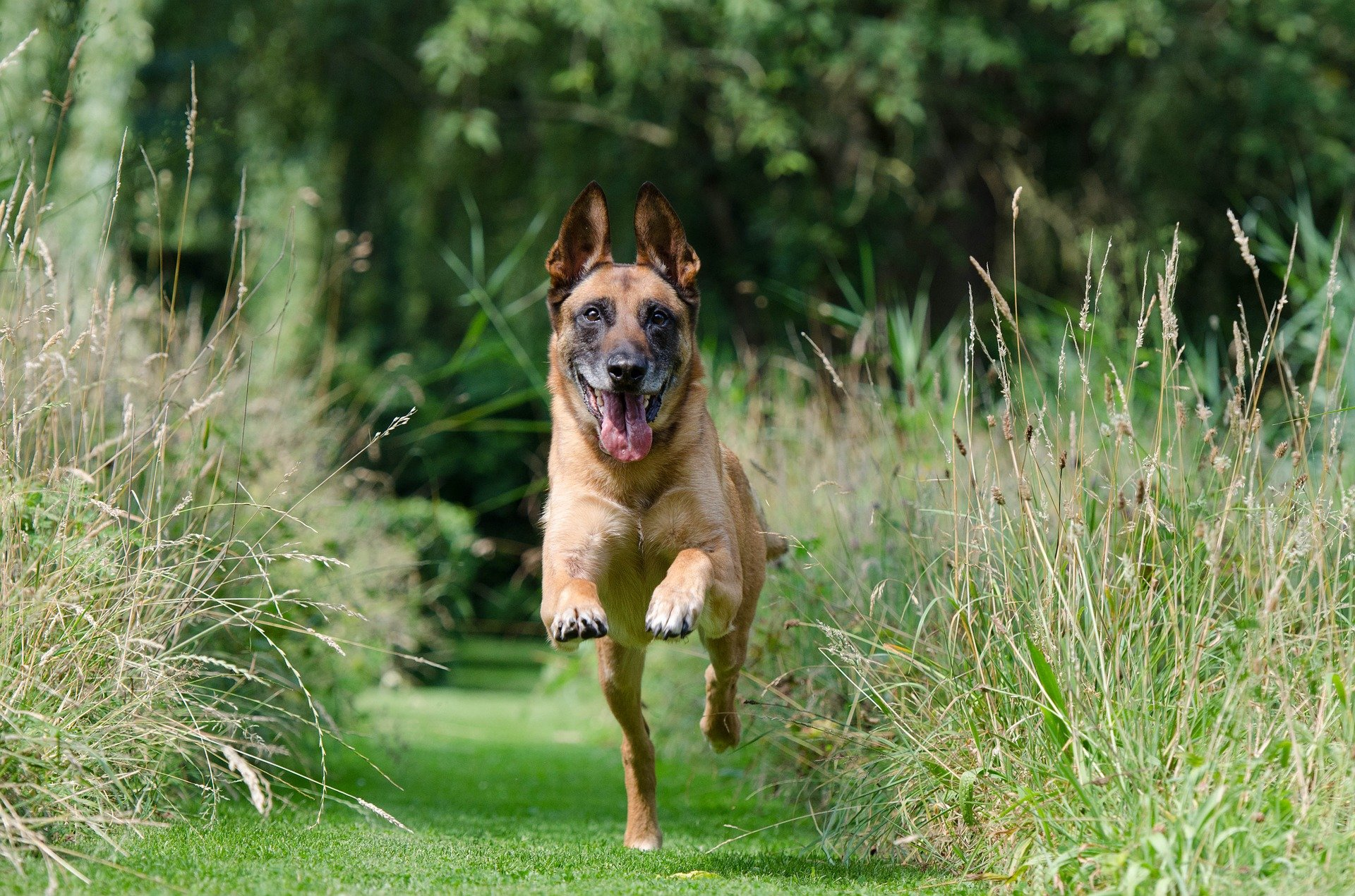 Come educare un cane iperattivo e farlo calmare