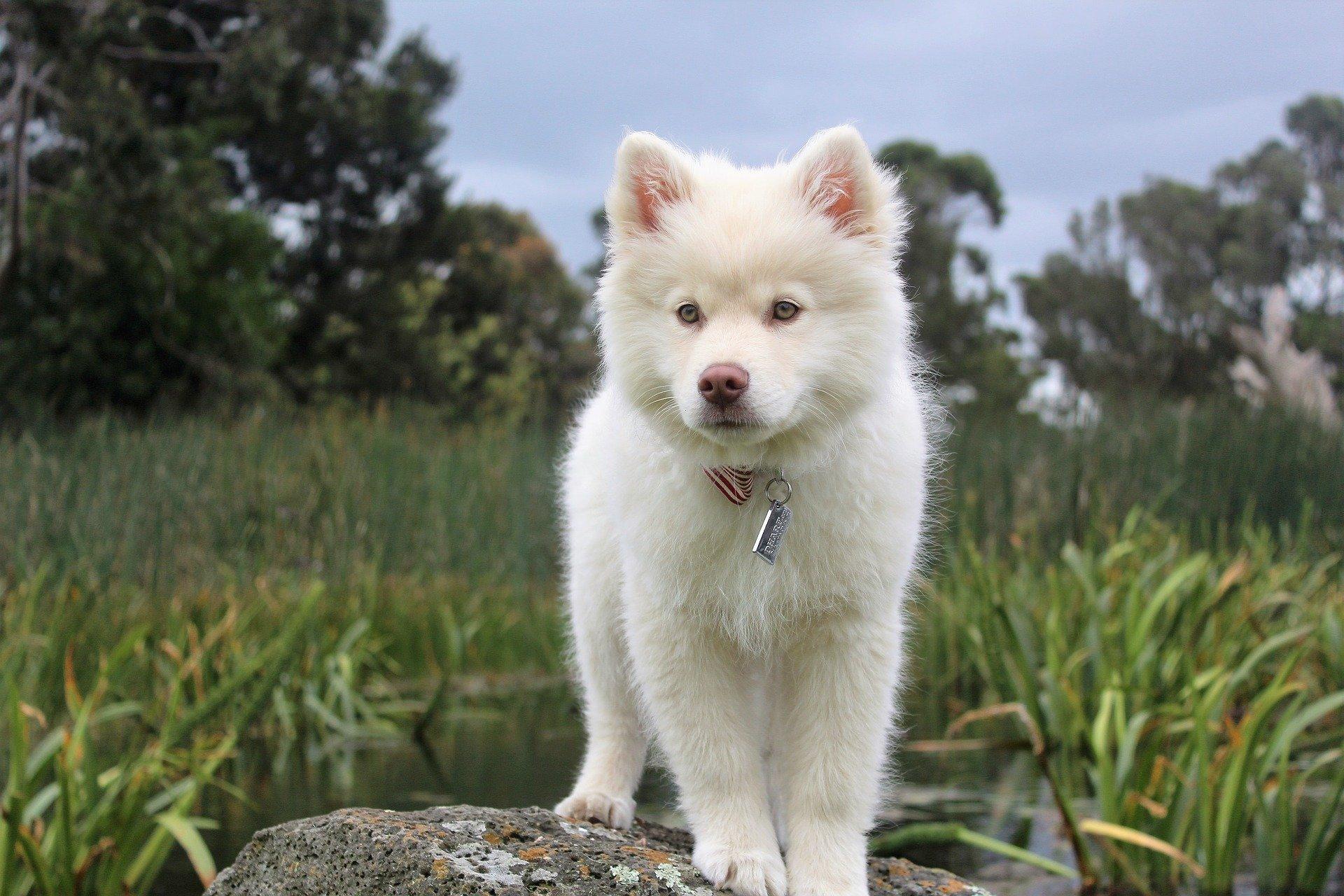 Pedigree cane: la sua importanza fondamentale