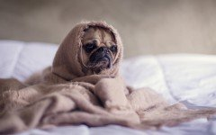 Can actually dogs have nightmares or dreams? Discover it, on Dogalize!