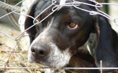 Come educare un cane che ha paura a non averne