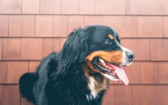Excessive panting in dogs. Should you be concerned?