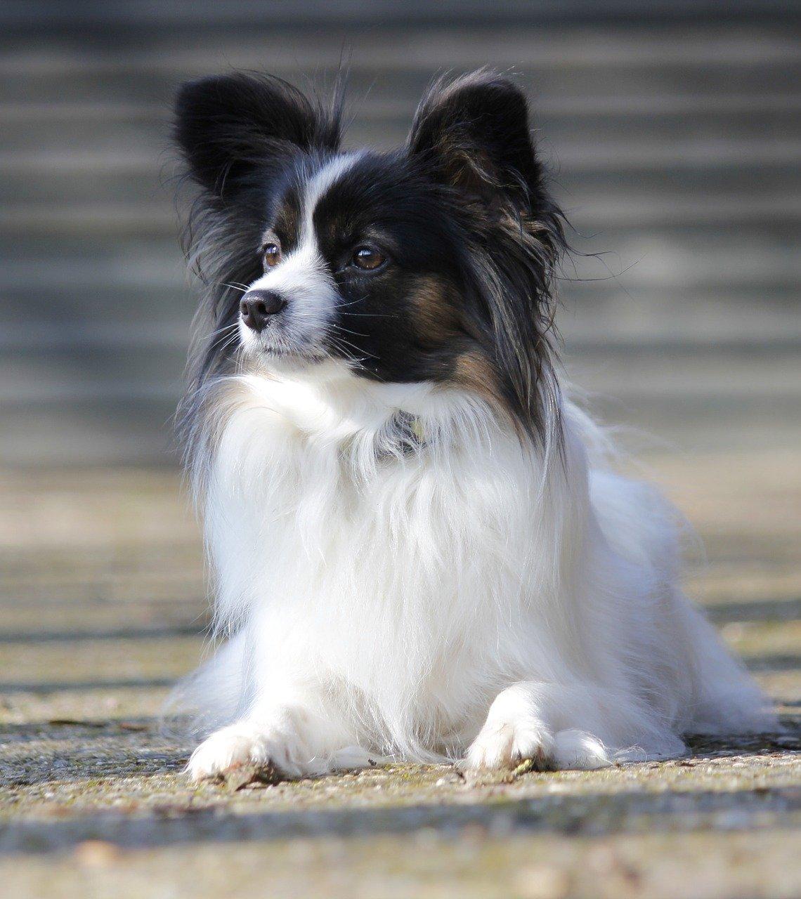 Fiori di Bach per cani: a cosa servono e come si somministrano
