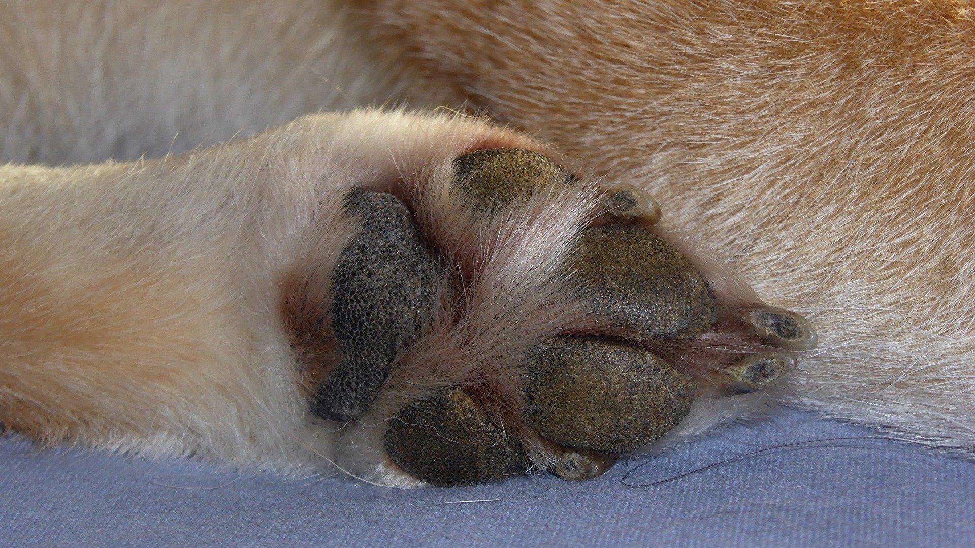 Come tagliare le unghie al cane senza fargli male