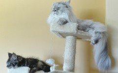 Trespoli per gatti: l'importanza di averne uno
