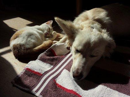 Ascaridi nel cane e nel gatto: sintomi e cura