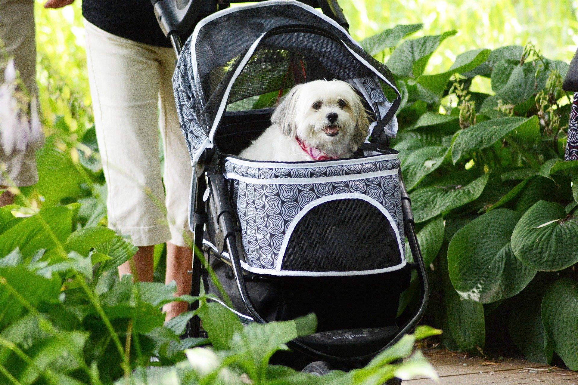 Trasportini per cani: le diverse tipologie