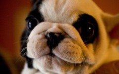 Cani teneri, le razze di cani che li rappresentano