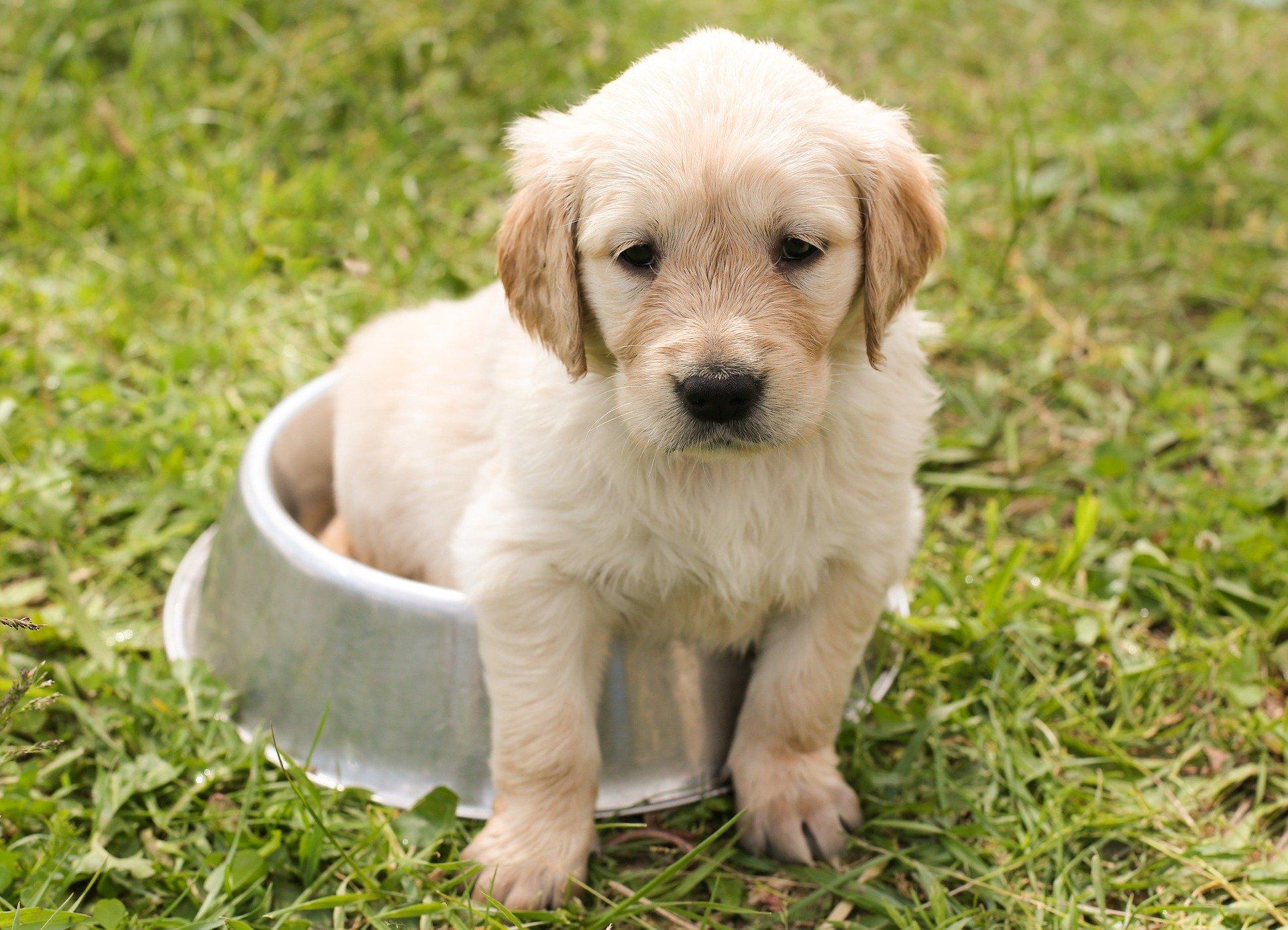 Svezzamento cani, le regole fondamentali da seguire