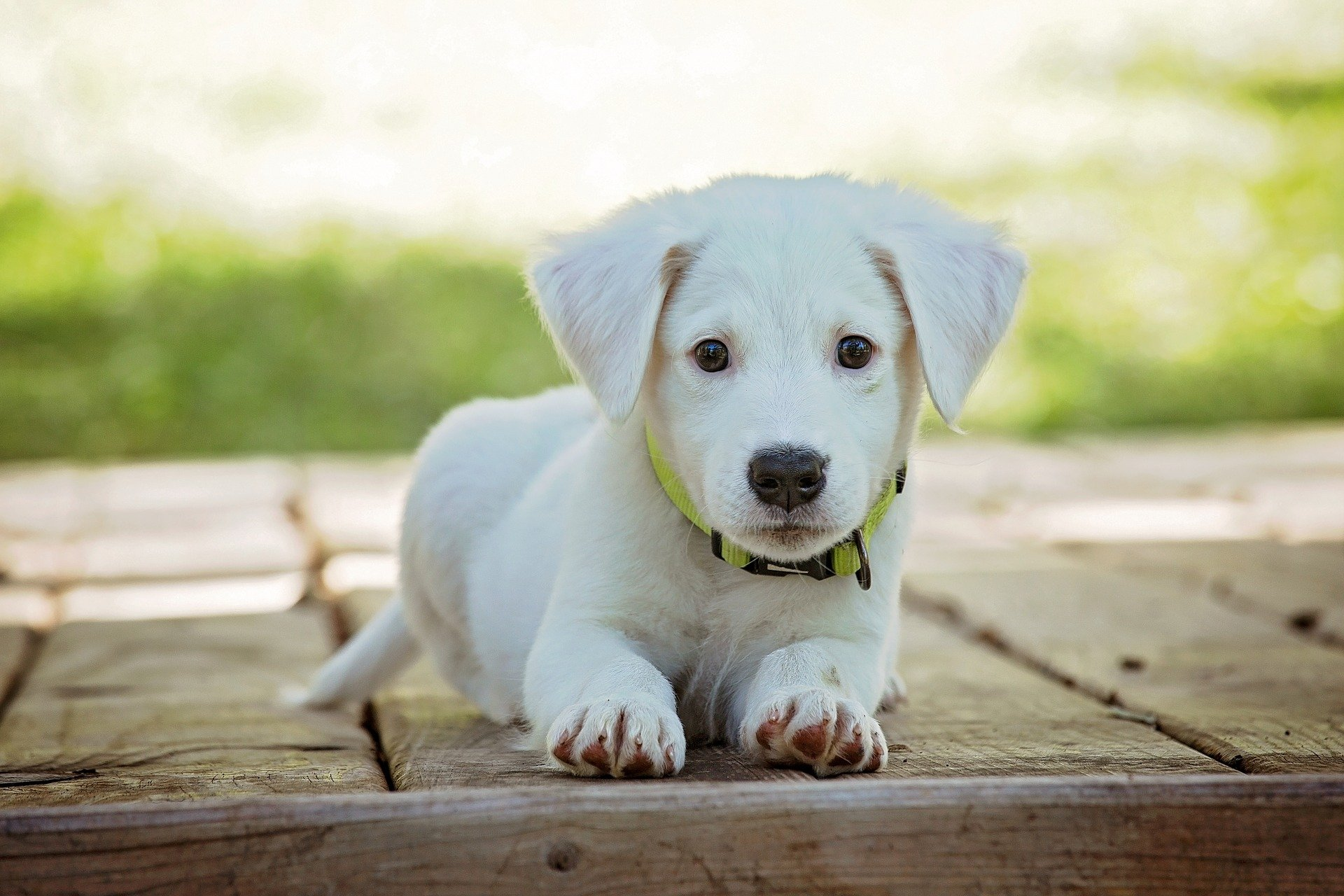 Come educare un cucciolo di cane nella giusta maniera