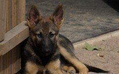 Cani in adozione: ecco come funziona e a chi rivolgersi