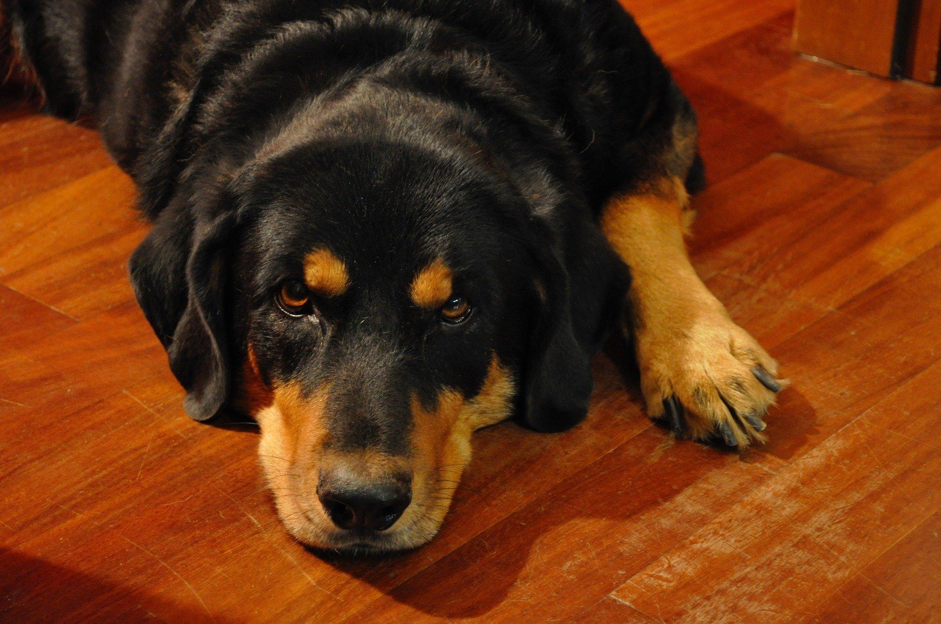 Olio di neem cani: a cosa serve e come si applica