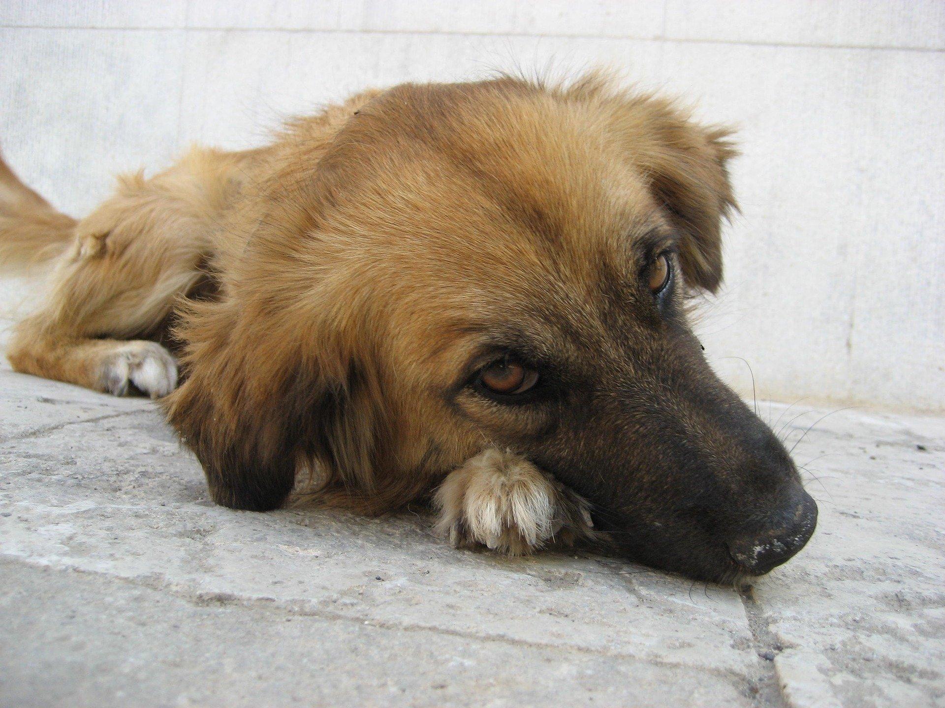 Avvelenamento del cane: come intervenire