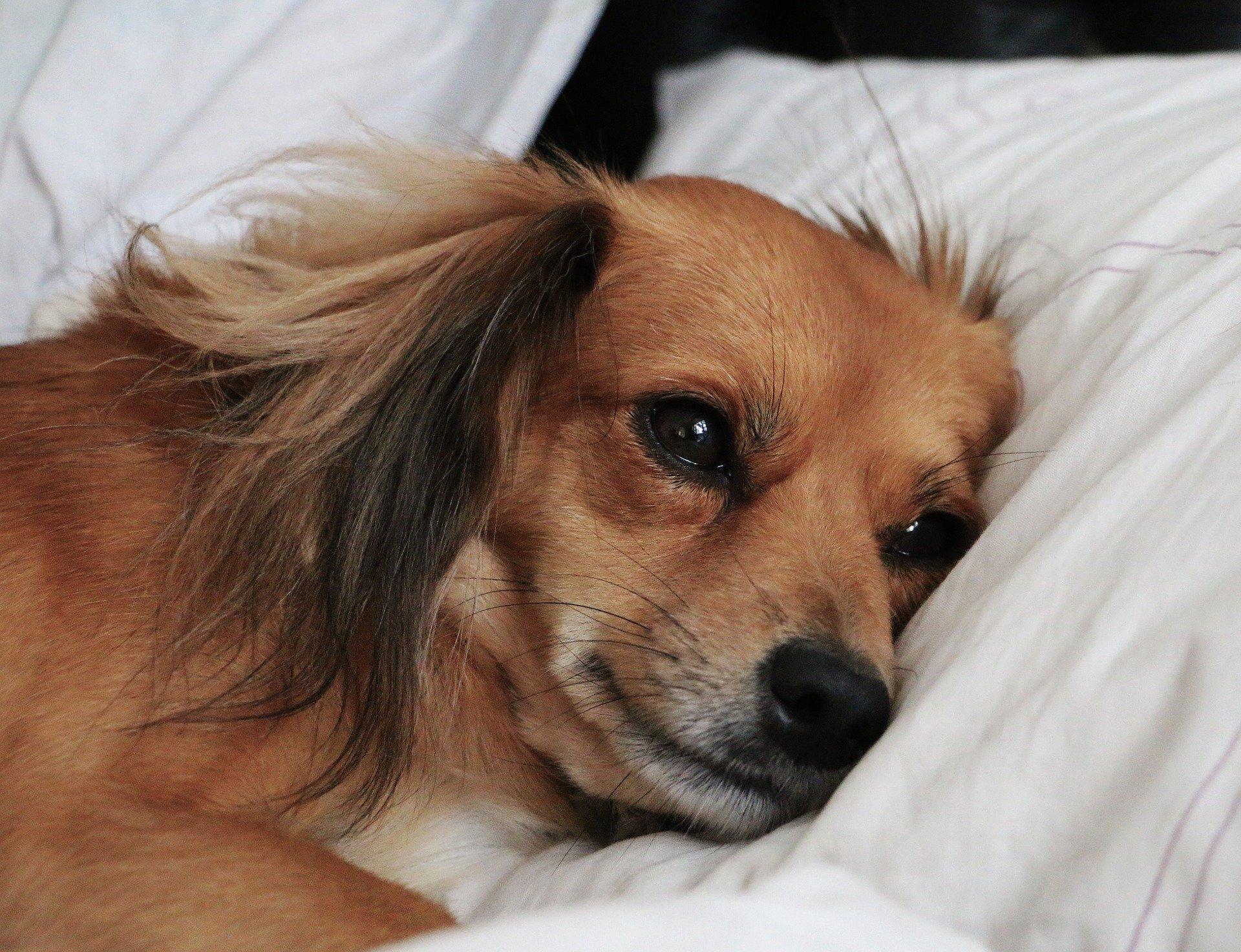 Il cane non mangia: quali possono essere le possibili cause