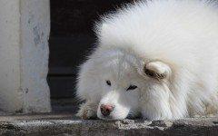 La mielopatia degenerativa del cane, le cause e i sintomi