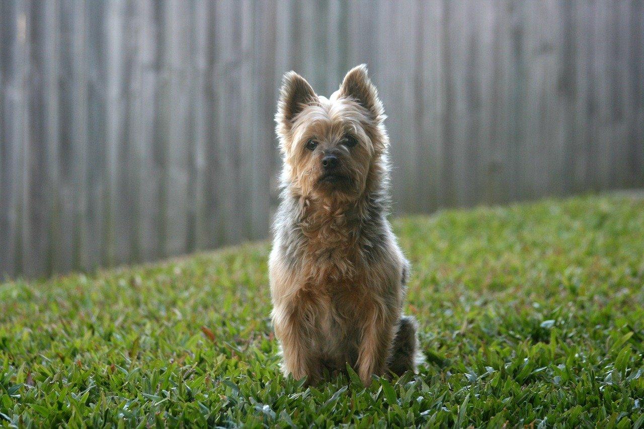 Forfora nel cane, perché si forma e come contrastarla