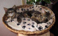Cucce per gatti da esterno: come devono essere?